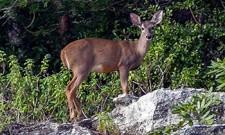 Mayakoba nature